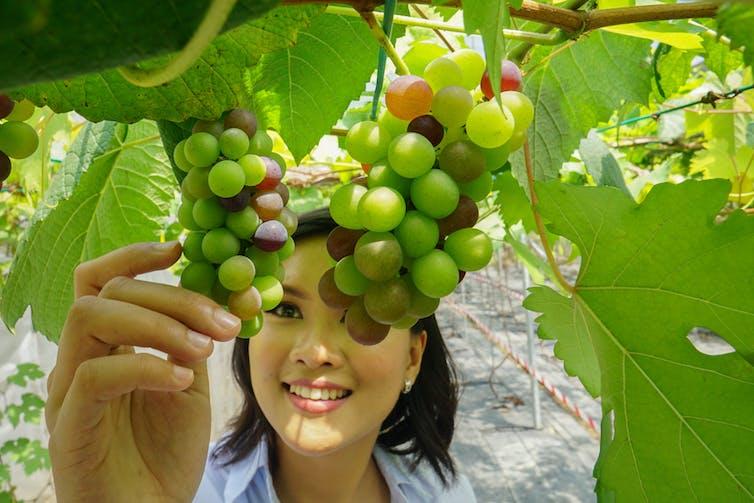 woman holds grape in vineyard