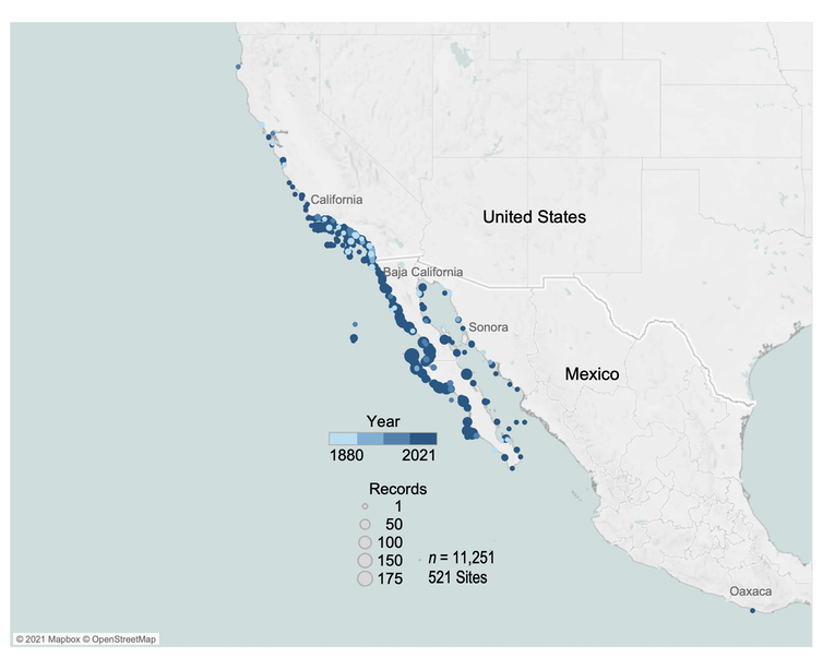 A map showing high density of giant sea bass along the west coast of the U.S. and along both sides of the Baja Peninsula.