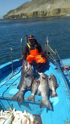 A man in orange overalls on a small blue boat sitting behind four large black fish on the deck.