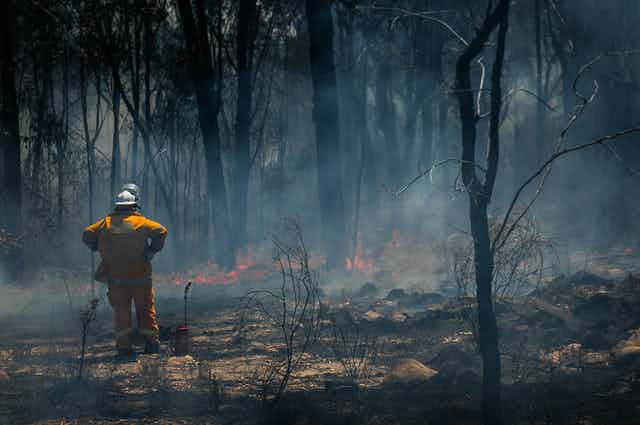 A fireman stands in burnt bushland