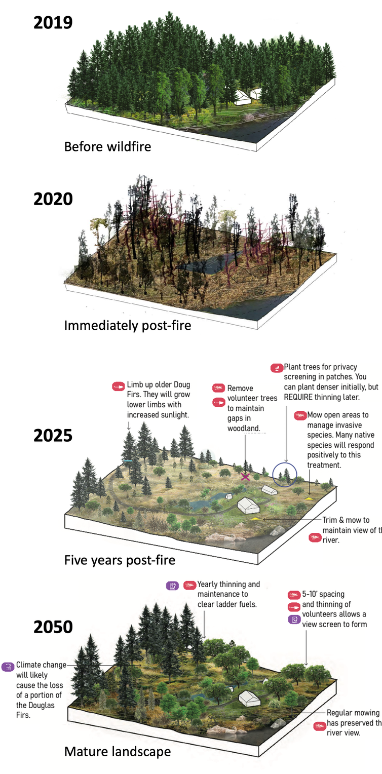 Four illustrations of a landscape after fire in 2020, 2025 and 2050