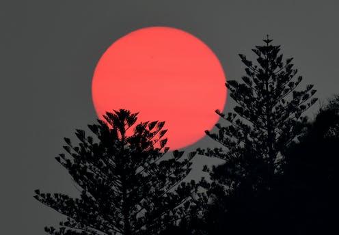 pink sun sets behind trees
