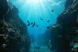 Cañón submarino en el océano Pacífico.