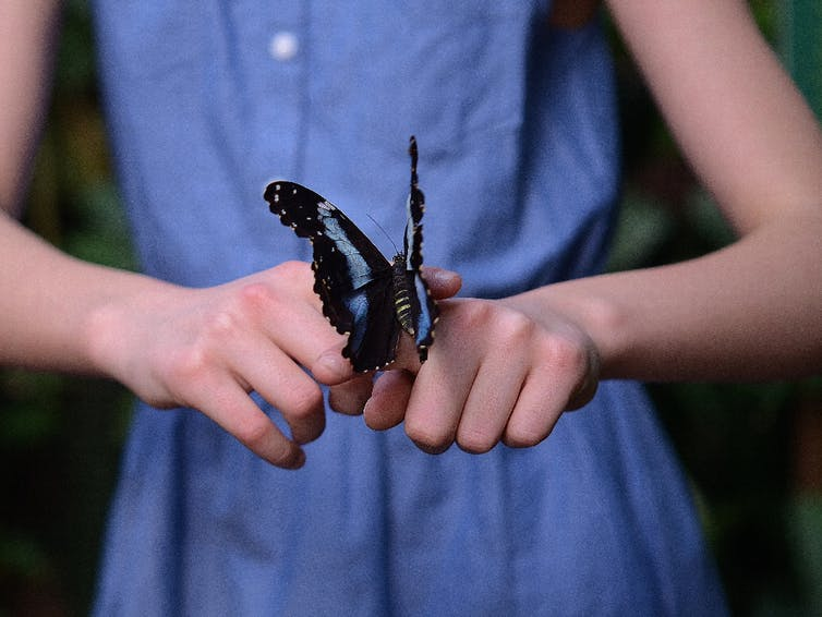 Butterfly on a girl's hand.