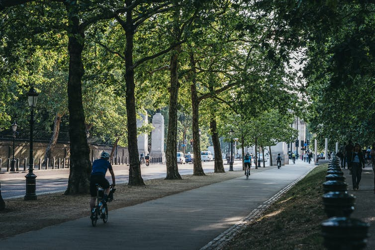People on bikes travelling on a tree-lined cycle path.