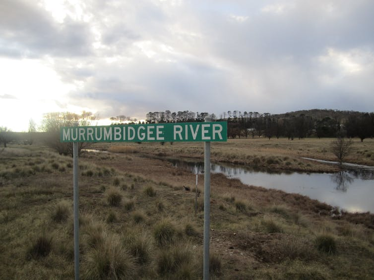 The Murrumbidgee River's wet season height has dropped by 30% since the 1990s — and the outlook is bleak