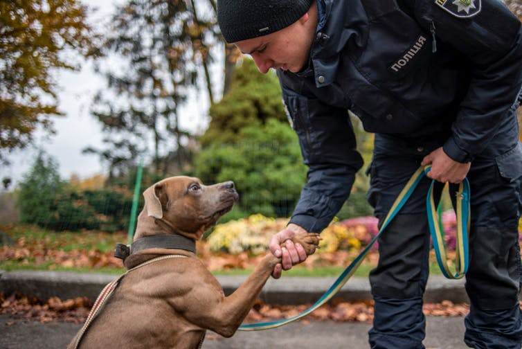 A man shaking a dog's paw on World Animal Day in Kyiv, Ukraine, in 2017.