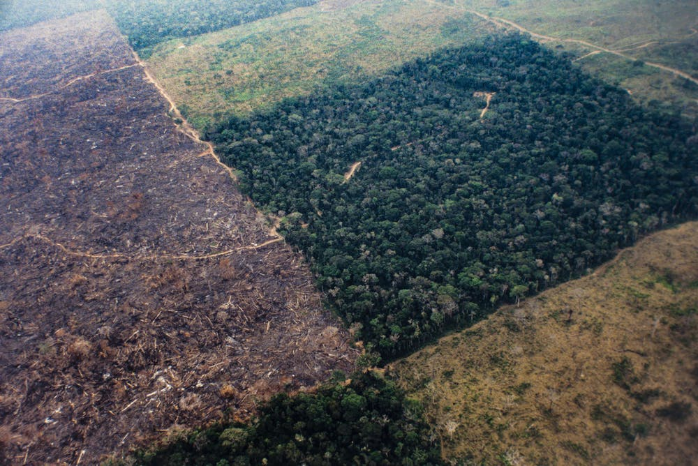 How would planting 8 billion trees every year for 20 years affect Earth's  climate?