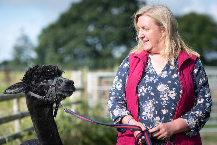 A woman stands with her pet alpaca on a leash.
