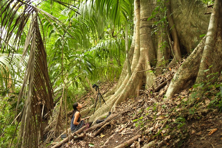 woman kneels behind video camera pointed at tree in tropical environment