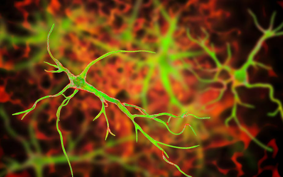 Artists impression of astrocyte cells in the brain.