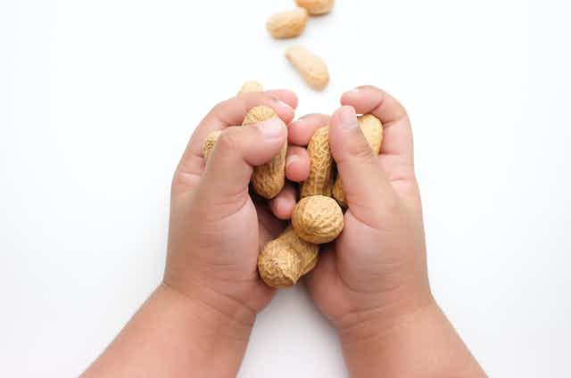 A child's hands holding some peanuts in the shell.