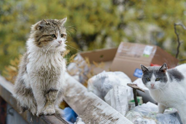 Two cats among rubbish
