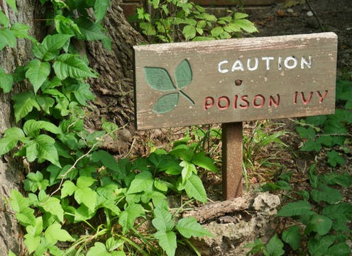 wooden sign in woods warns of poison ivy