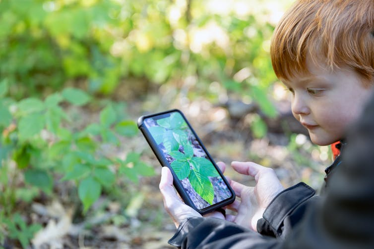 child with smartphone pointed at plant in the woods with identifying app up