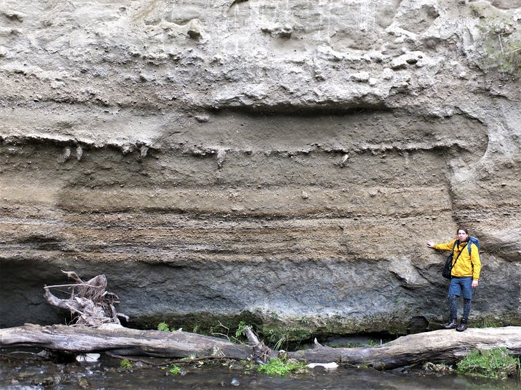 A layer of fossil molluscs along the banks of the Rangitikei River in a New Zealand fieldsite