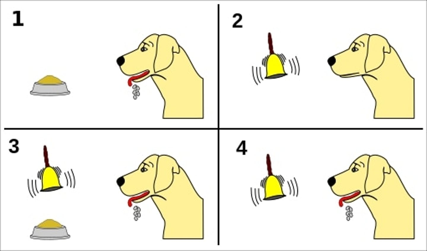 An image showing a dog salivating when offered food, not salivating when a bell is rung, then salivating when a bell is rung and food is offered and finally salivating when just a bell is rung.