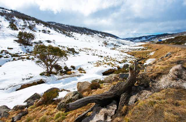Patches of snow on brown alpine bush