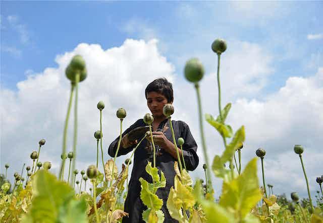 A boy in a poppy field.