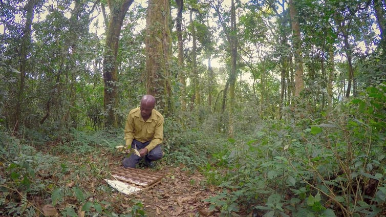 A person sorts through leaves on the forest floor