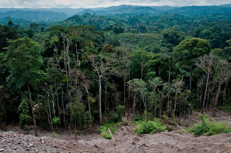 A tropical forest near Congo Brazzaville