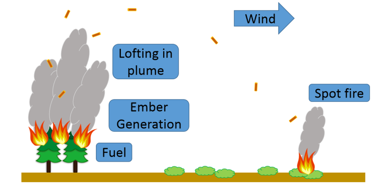 An illustration of firebrands from burning trees traveling on the wind to a location well away from the original fire