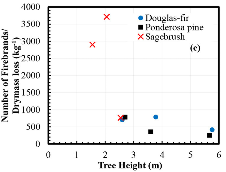 Scatterplot chart compares number of firebrands per mass to the tree height. Taller trees had fewer firebrands.