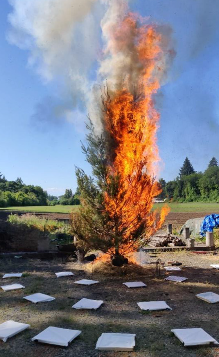 A burning fir tree with white square around it.