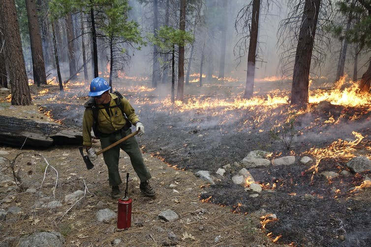 A Firefighter With With An Ax And Drip Canister Keeps An Eye On A Low-Intensity Fire Burning Among Trees.