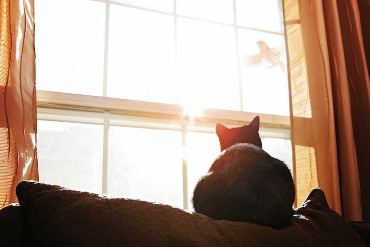 cat watches bird through window