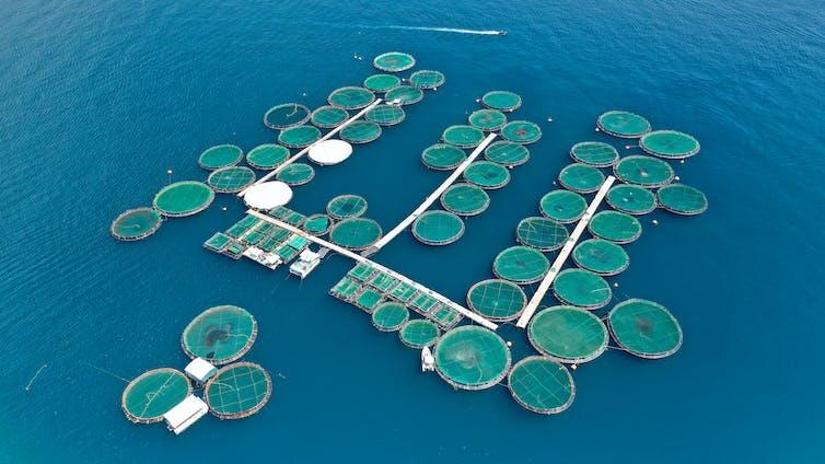 An aerial photograph of a fish farm.