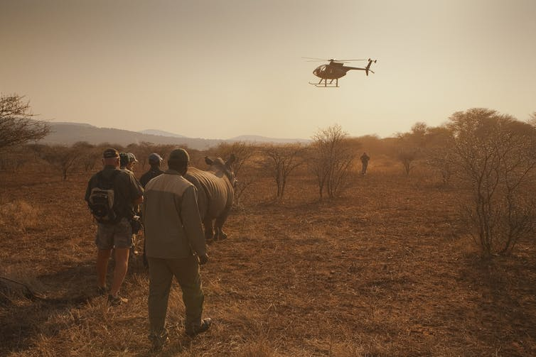 A helicopter hovering over people with a rhino
