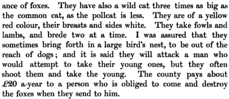 An excerpt of text: '-ance of foxes. They have also a wild cat three times as big as the common cat, as the pollcat is less. they are of a yellow red colour, their breasts and sides white. They take fowls and lambs, and brede two at a time. I was assured that they sometimes bring forth in a large...'