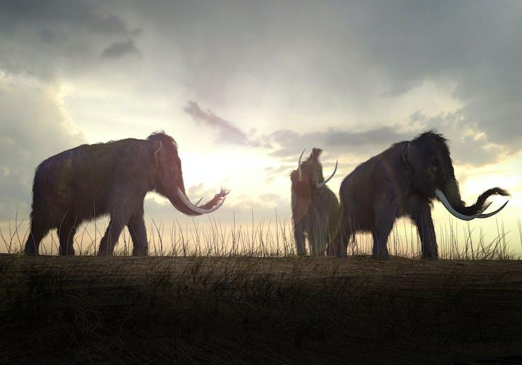 Render of woolly mammoths on field.