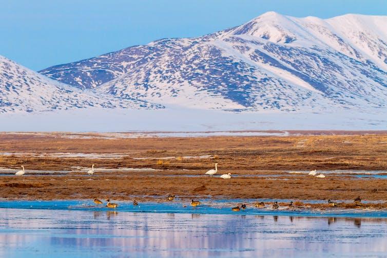 Siberian tundra landscape