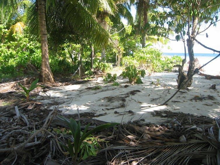 Sand washed up an island's beach