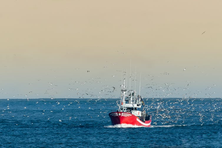 A fishing boat coming into harbour