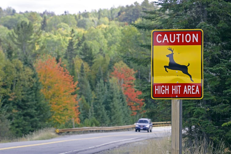 Car On Road During The Start Of Leaf Colors With Road Sign Reading: Caution: High Hit Area