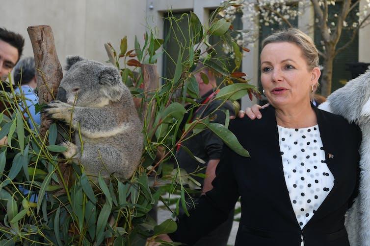 koala on branch with woman