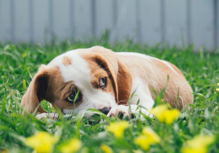Puppy in grass looking nervous