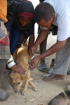 People injecting a dog
