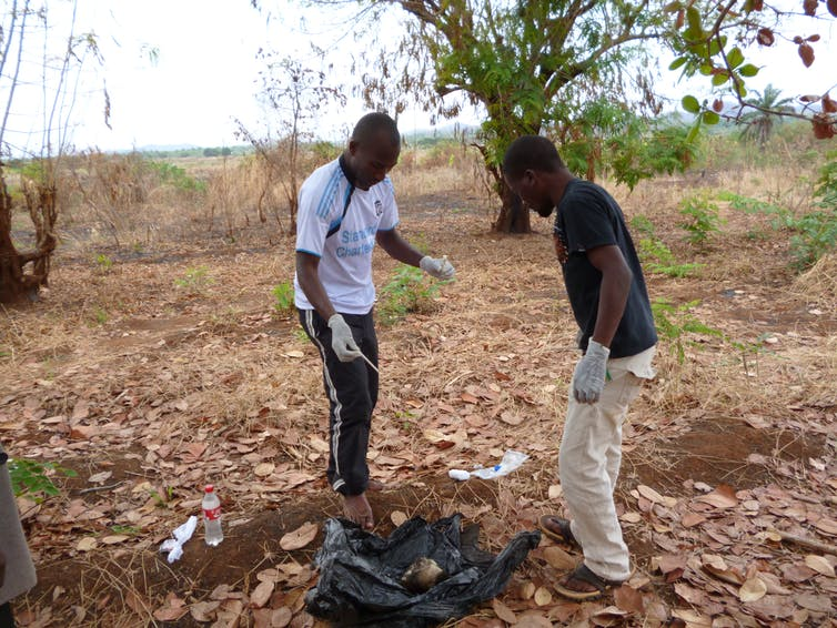 Researchers collecting sample from a jackal head surrounded by trees and the ground.