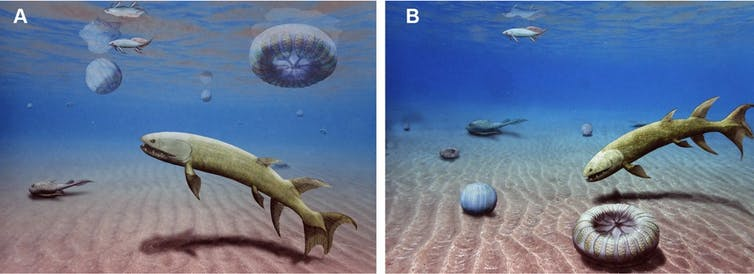 Illustration showing two possible reconstructions of the Acomb Jelly Fossil