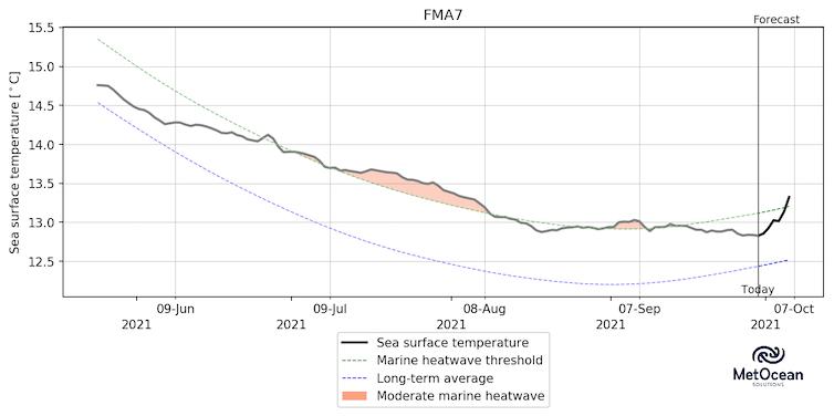 This graph shows the ocean temperature anomalies in an area where hoki spawn.