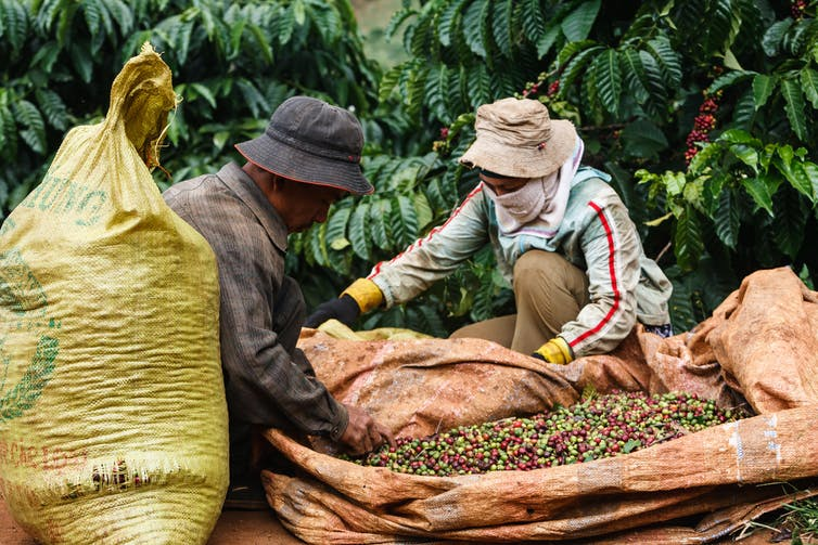 A farmer and a supplier trading beans in Vietnam.
