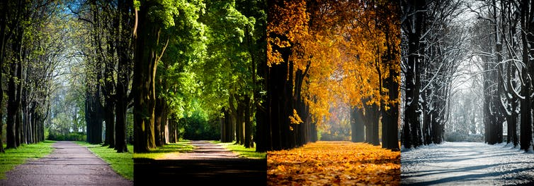 panels of a shaded road through four seasons
