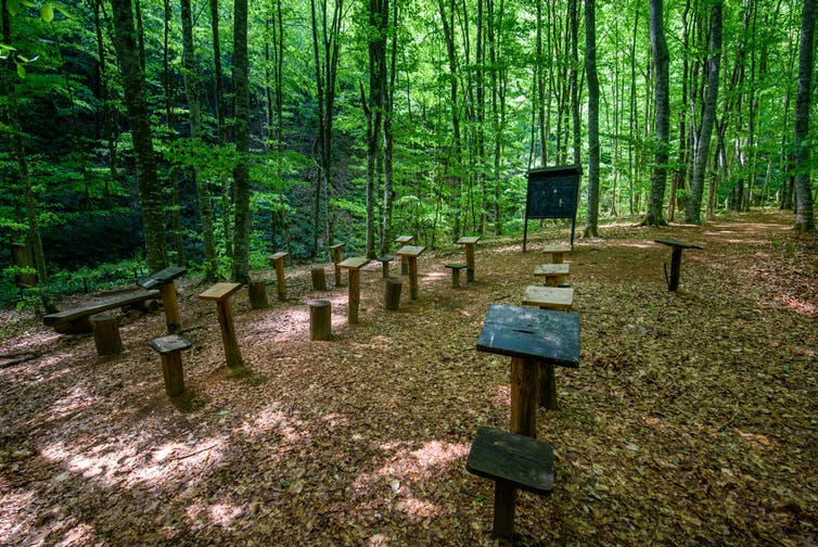 Empty wooden chairs and tables in forest cleaing with blackboard at the front.