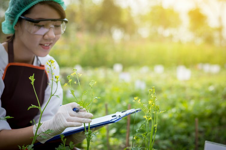woman with clipboard inspects plants