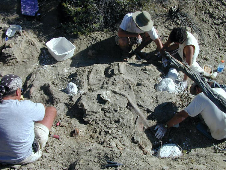Scientists sitting in the dirt brush soil away from fossilized bones.
