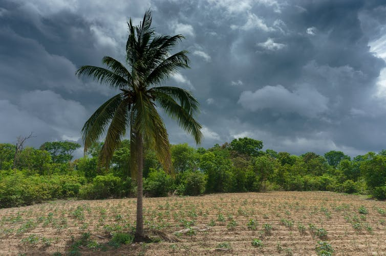 A palm tree in the middle of a field